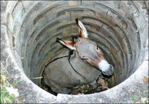 Esel im Brunnen